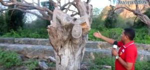 Árvores Mutiladas