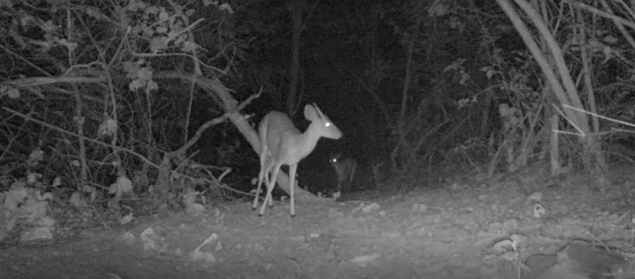 Animais ameaçados de extinção são vistos em matas na zona rural de Quixadá