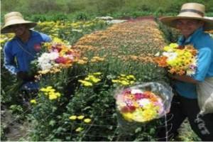 http://www.monolitospost.com/wp-content/woo_custom/1549-floricultura.jpg
